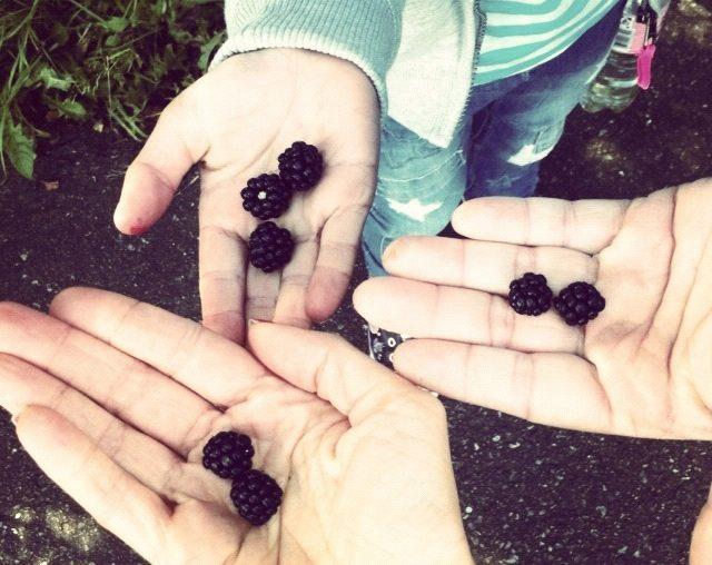 brombær-fund