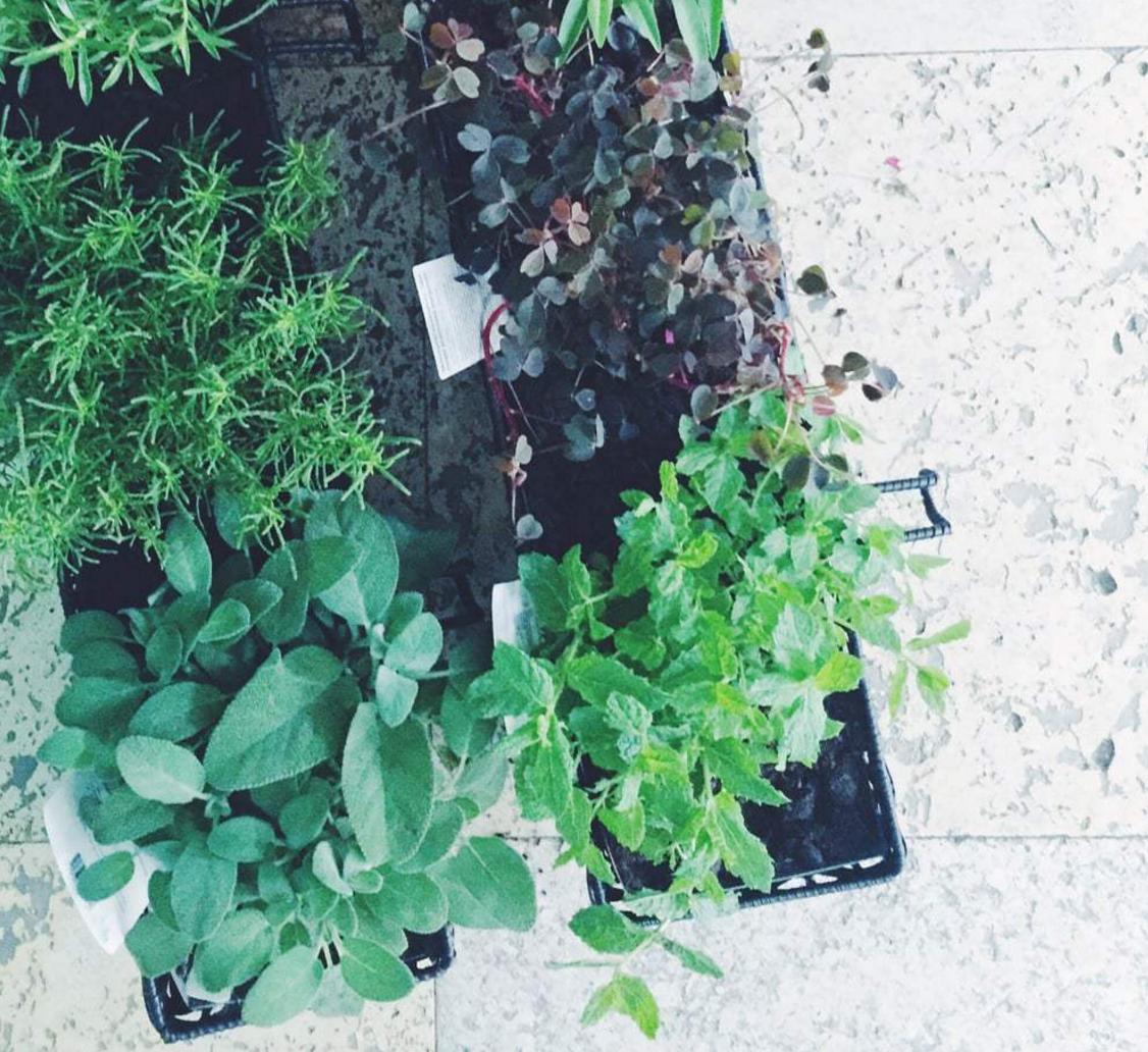 Altaneriet: Urban gardening paradis på Østerbro!