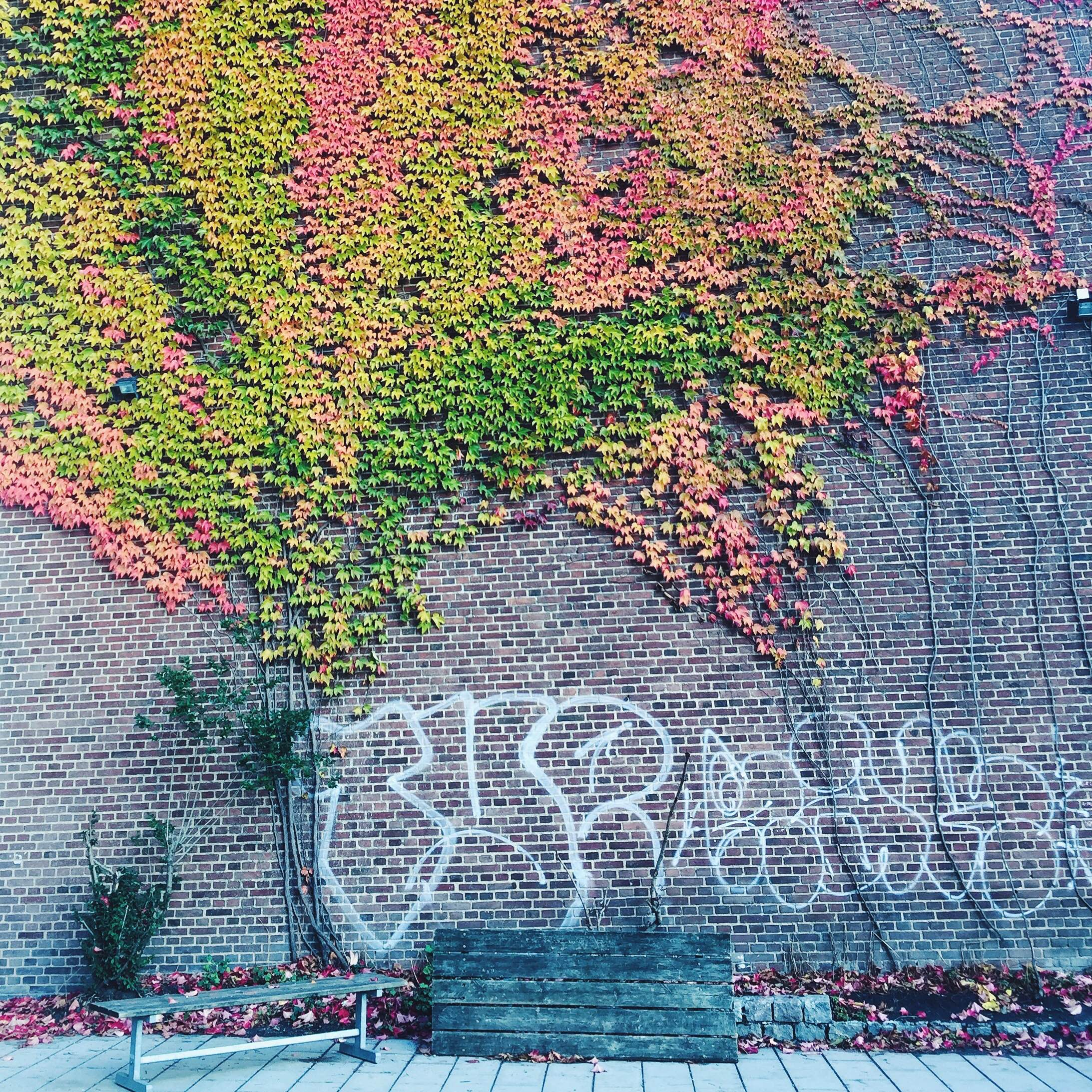 Efterår på Østerbro