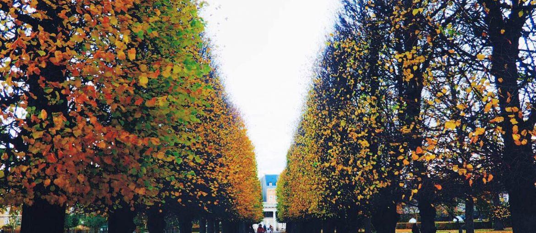Efterår i Kongens Have