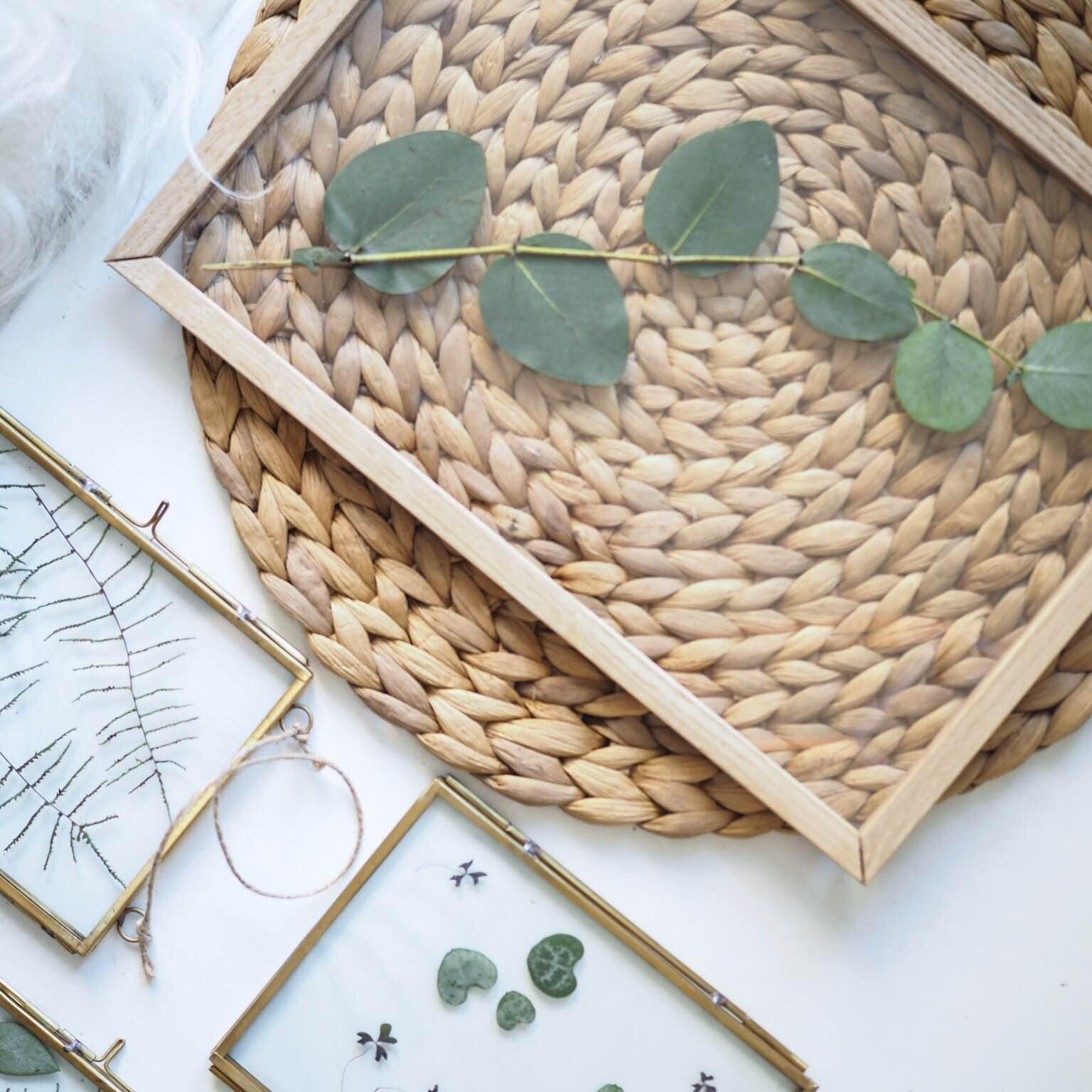 Transparente rammer med eucalyptus