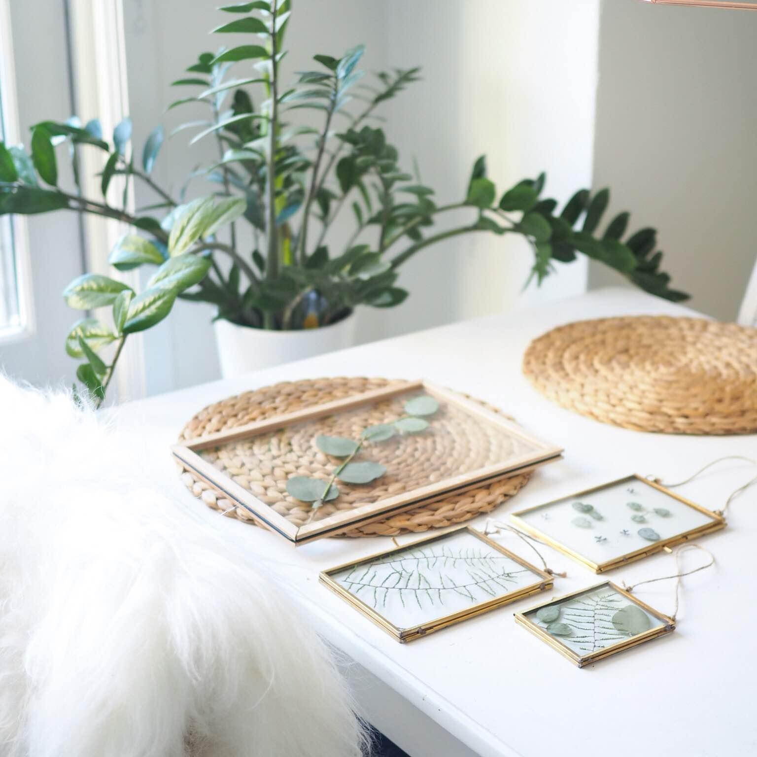 Transparente rammer med planter