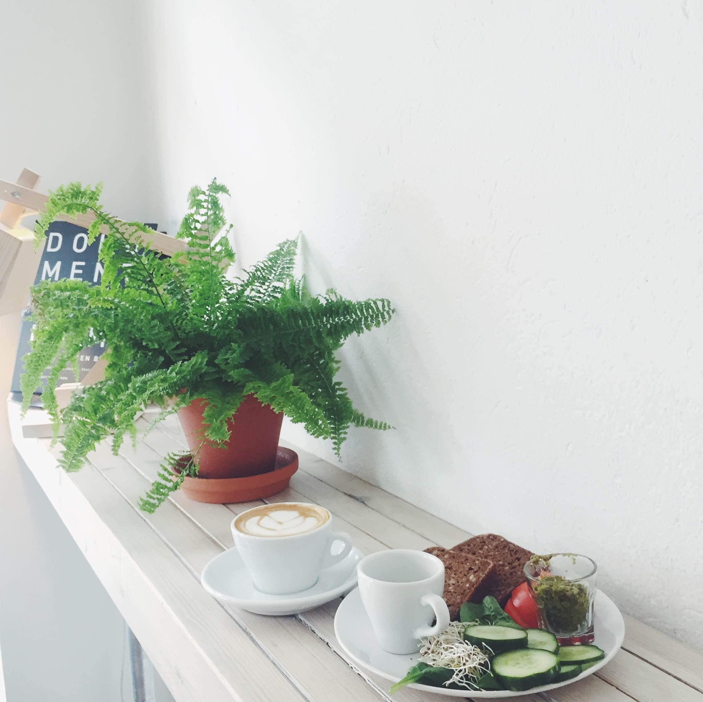 Morgenmad hos Djäkne i Malmø. Rugbrød med agurk og tomat og pesto. Smukke æstetiske omgivelser med planter