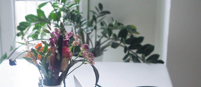De her planter skal du købe