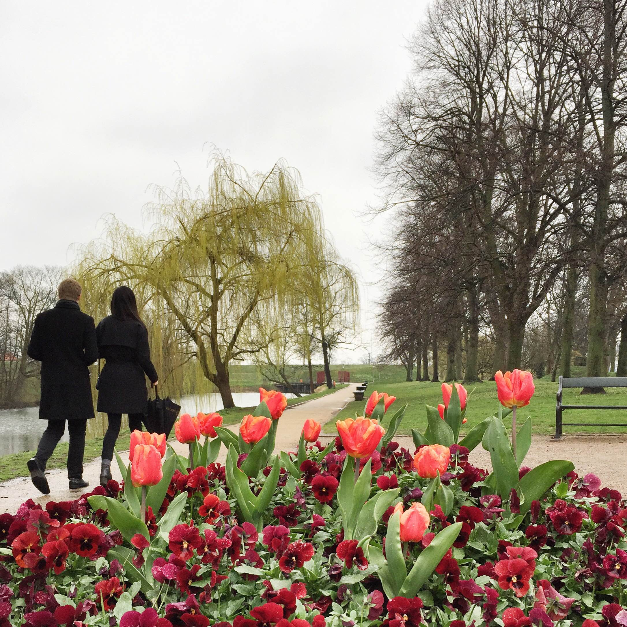 Red tulips, people walking in a garden