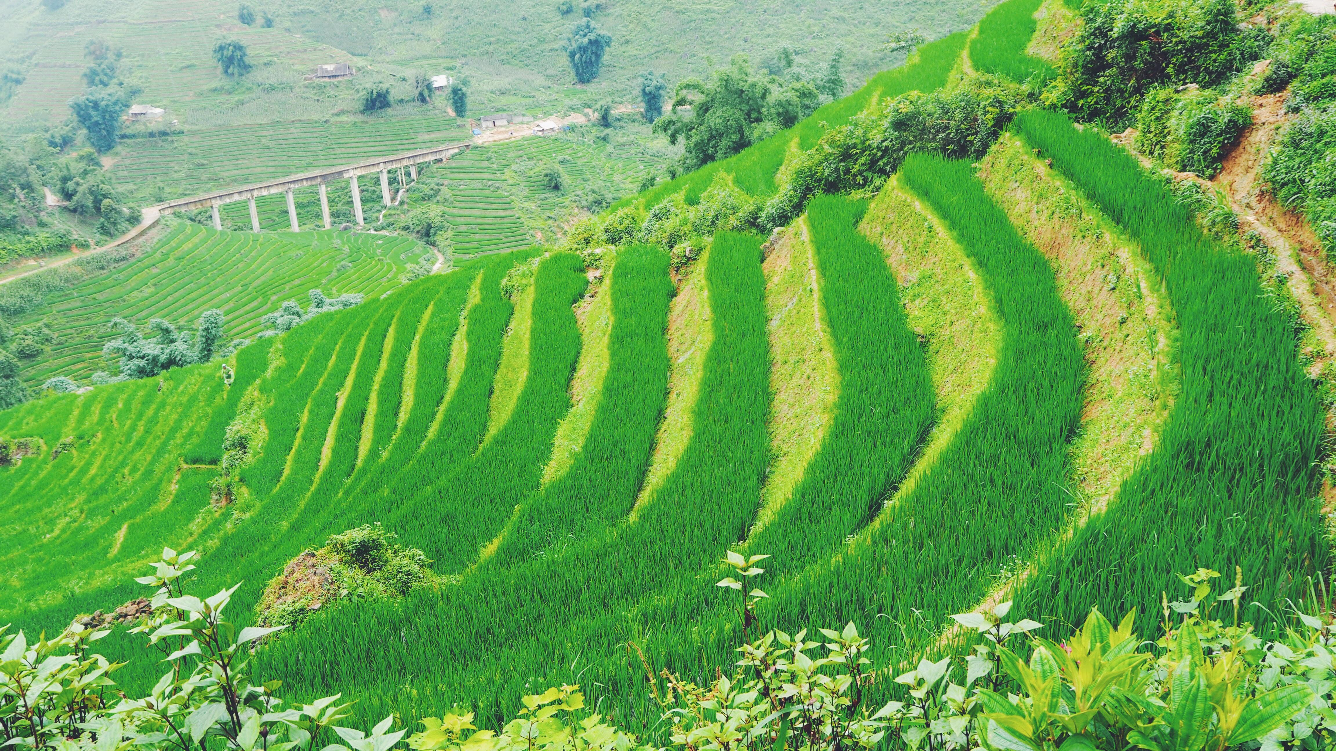 Grønt og smukt i Sapa