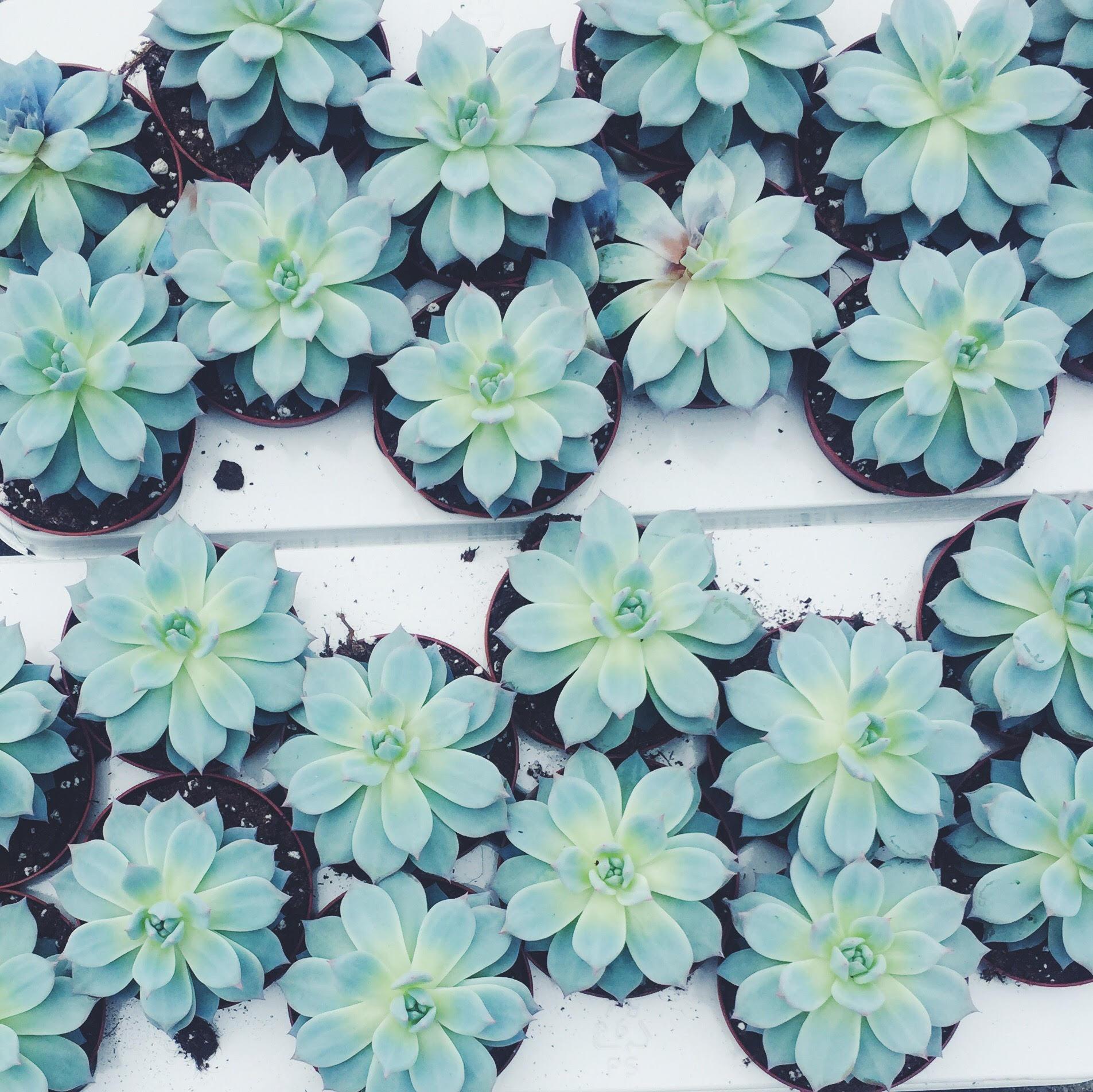 sukkulenter i massevis. Køb grønt og planter i København