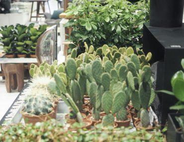 kaktusser i Vanløse